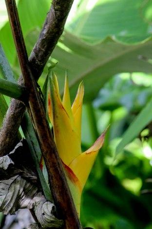 Saba Nature 10