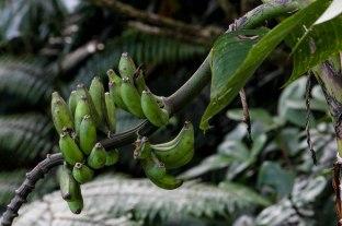 Saba Nature 14