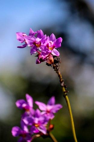 Saba Nature 3