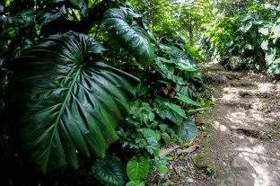 Saba Nature 4