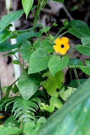 Saba Nature 6